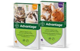 Bolti átvételre : Bayer Advantage 40 spot on oldat 4 db ampulla  A fotó illusztráció , cicára és nyuszira