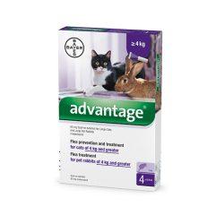 Bolti átvételre : Bayer Advantage 80 spot on oldat 4 db ampulla .  A fotó illusztráció